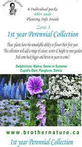 Perennial  Collection 1st Year produces flowers)