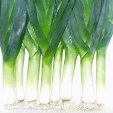 Onion - Leeks