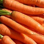Carrots - Danvers  - Tasty tapering semi blunted ends. Very suitable for home gardeners needs. Easy to grow.  Carrots thrive when planted near lettuce, chives, leeks, rosemary, sage, peas and wormwood.