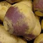 Winter Turnip - The most popular of Winter or Swedish turnips. These cool weather plants have a rich red-purple top on their smooth globe shaped roots and white flesh. Flavour enhances after frost. Excellent in Vegetarian dishes. Sow again in late summer for an autumn crop. - Click for more details!