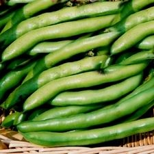 Beans - Broad