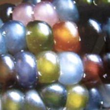 Corn - Glass Gem (Rare)