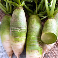 Radish - Green Meat
