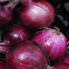 Onion - Red Globe