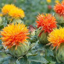 Safflower Mix